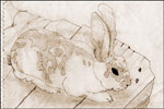 Drawing of Brownie the bunny